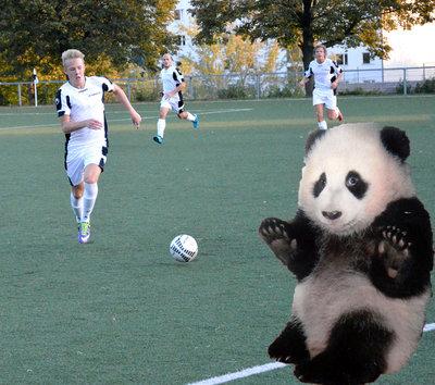 Panda angst fck1