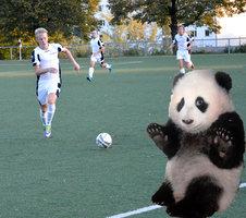 Der Tag, an dem die Pandas ausstarben